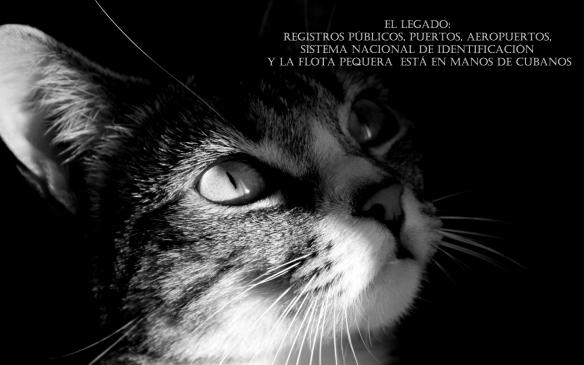 gatito-blanco-y-negro-130099
